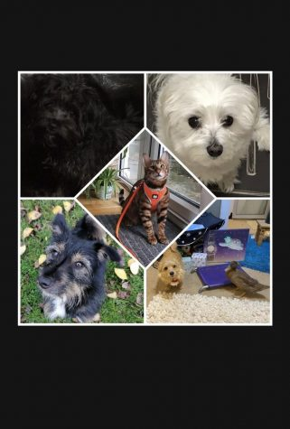 Quarantine Buddy: Importance of Pets During the Pandemic